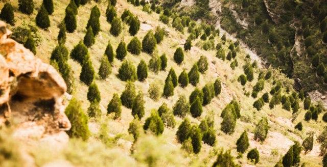 cina-riforestazione