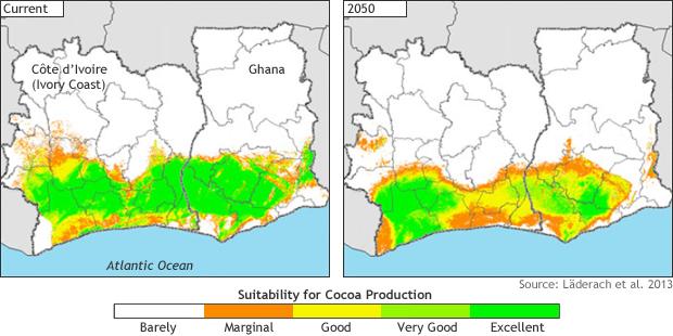 Sostenibilità Cacao